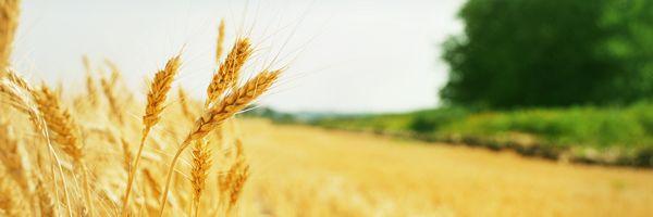 農地法と国家戦略特別区域法