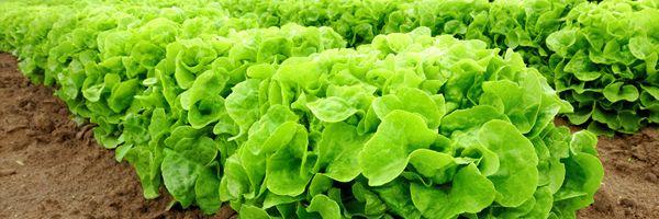 日本農業の救世主として期待されるスマート農業