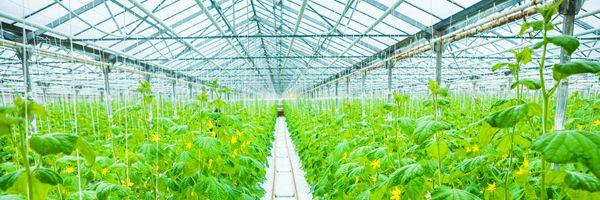 スマート農業技術の例 ④環境制御技術