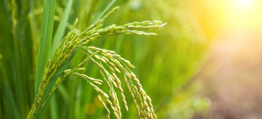 弁護士が解説する農地法改正 – 農地法が農業ビジネスに与える影響