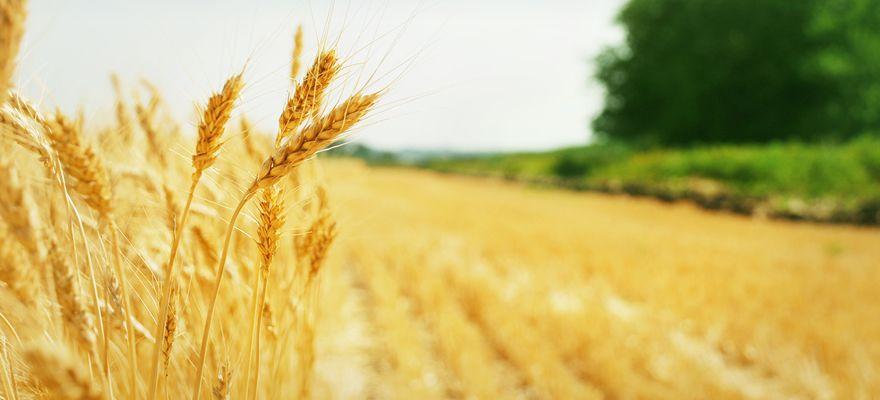 スマート農業とは?IoT×農業が変えるアグリビジネスの未来
